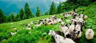 Kolochava tour. Interesting tour to the Carpathians