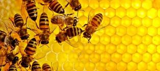 Pszczoła i miód. Centrum Pszczelarskie w Charkowie