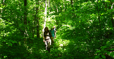 gomolshanskie lesa 11