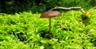gomolshanskie lesa 7