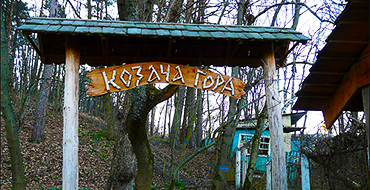 gomolshanskie lesa 9