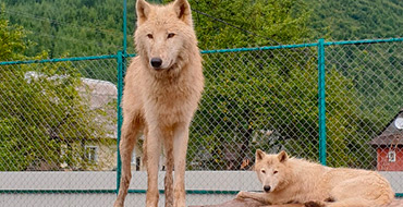 dolina volkov 002