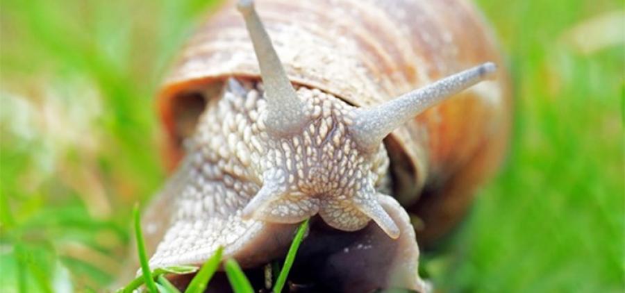Spanish delicacies. Snail farm