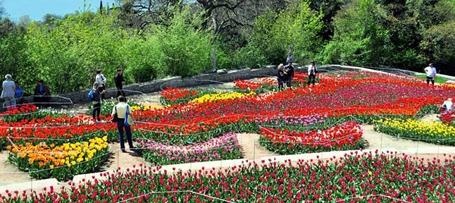 The parade of tulips. 2 days in spring Crimea