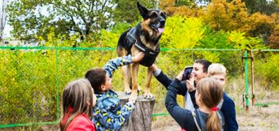 Dog work. Dog Training Center
