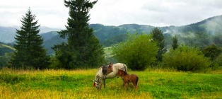 In the heart of the Carpathian Mountains. Skole Beskydy